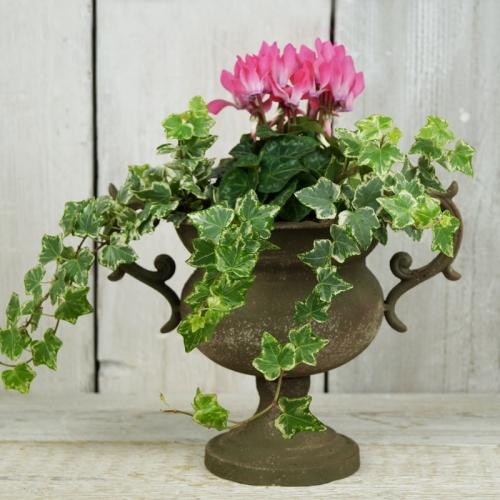 Bowl Flower Planter