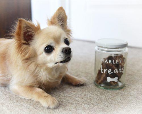 Personalised Pet Treat Jar